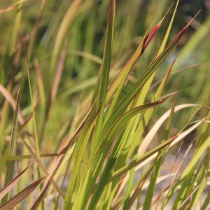 WSUD Plant Database - WaterbyDesign